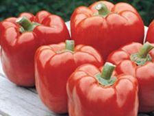 ADVERTORIAL: Seminte profesionale de legume pentru gradina ta, de cea mai buna calitate