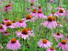 Cum sa-ti cultivi propriile remedii naturiste