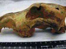 Au fost descoperite fosile de caine vechi de 33.000 de ani