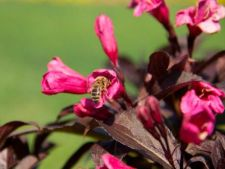 3 arbusti ideali pentru primavara 2013