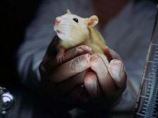 Produsele cosmetice testate pe animale sunt interzise in UE
