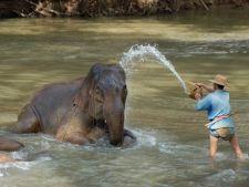 Cele mai bune locuri din lume in care poti vedea un elefant de aproape