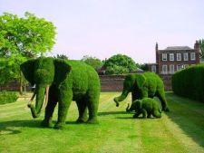 Sculpturi din arbori si arbusti pentru gradina ta de basm
