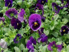 Cumpara plante sanatoase:  4 sfaturi utile