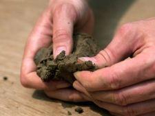 Cultivarea legumelor: cum verifici drenajul si compozitia solului