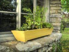 Cum sa cultivi legume in ghiveci