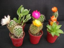 4 plante decorative in ghiveci, potrivite pentru gradina