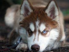 Rabia la caini - cum se manifesta si care sunt riscurile