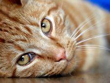 Cele mai periculoase 4 boli ale pisicilor