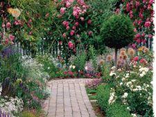 Amenajarea gradinii: plante potrivite si sfaturi de ingrijire