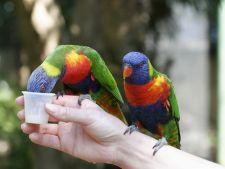 Plante toxice pentru papagali