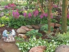 4 plante care iubesc umbra