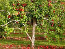 Ponturi pentru plantarea pomilor fructiferi