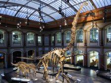 4 muzee de istorie naturala unde poti admira schelete de dinozauri