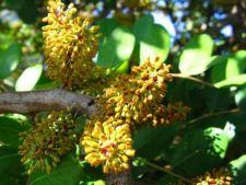 Plantele cu cel mai urat miros din lume