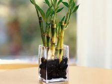 Hidrocultura: Cum sa cresti plante in apa