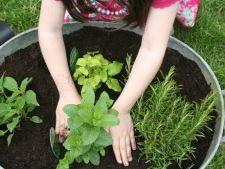 Prima experienta de gradinarit a copilului: ghiveciul cu plante aromatice