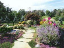 Infrumuseteaza-ti gradina: 7 plante perene perfecte pentru alei