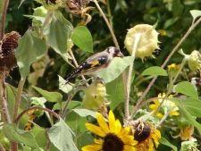 5 plante care hranesc pasarile cantatoare