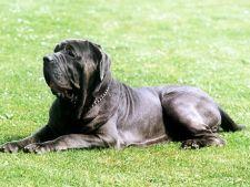 Top 5 rase de caini cu cele mai multe cute in piele