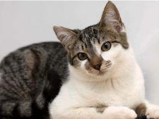 10 beneficii ale adoptiei unei pisici adulte