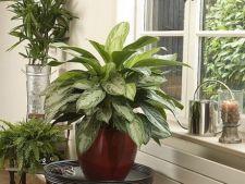 5 greseli de evitat in ingrijirea plantelor din ghivece
