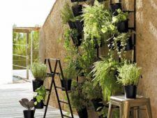 5 solutii ieftine pentru amenajarea unui perete verde in balcon