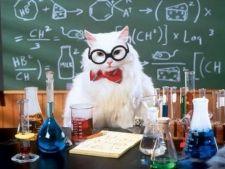 Cele mai faimoase glume online cu pisici