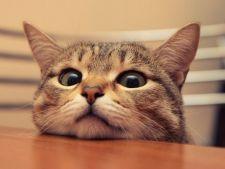 5 moduri de a preveni plictiseala pisicii
