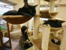 Destinatii neobisnuite de vacanta pentru iubitorii de pisici