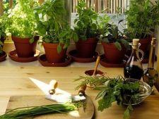 Cum sa ingrijesti plantele aromatice: 3 ponturi utile