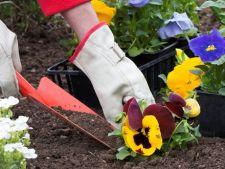5 moduri de a reduce munca necesara pentru o gradina frumoasa