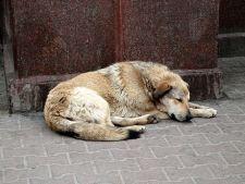 Bucurestenii se opun amenzilor pentru cei care hranesc cainii maidanezi