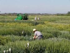 Fermierii vor primi subventii cu 20% mai mari de la UE daca isi arendeaza terenurile