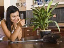 Invata sa readuci la viata o planta deshidratata!