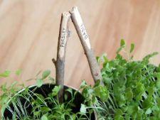 4 obiecte banale pe care le poti transforma in etichete pentru plante