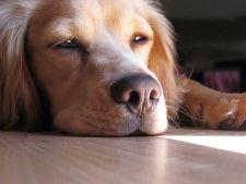 5 moduri de a alunga plictiseala cainelui