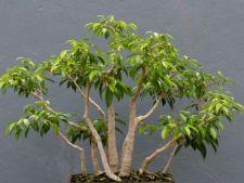 4 tipuri de plante exotice pe care le poti avea la tine acasa