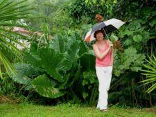 Ce poti face in gradina pe o vreme ploioasa