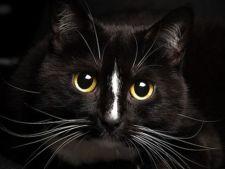 5 lucruri interesante despre mustatile pisicilor