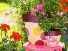 5 ponturi pentru o gradina de vara incantatoare