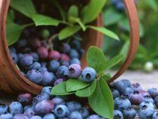 Fructe de padure, contaminate cu hepatita de tip A, provenite din Romania