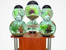 7 modele de acvarii neobisnuite, potrivite pentru decorarea locuintei