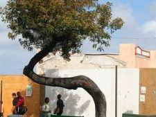 9 dintre cei mai ciudati arbori din lume