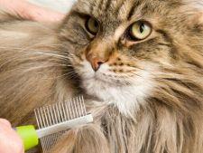 Pisica ta naparleste excesiv? Trucuri pentru controlarea caderii parului