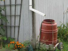 Apa de ploaie, mina de aur pentru plantele din gradina