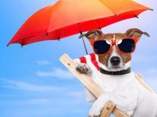 Pregateste-ti catelul pentru plaja! 5 accesorii care nu trebuie sa-i lipseasca vara aceasta