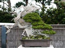Cum sa folosesti arborii bonsai in decorarea gradinii