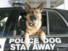 5 rase de caini recrutate frecvent in politie