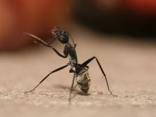 Moduri non-toxice de a tine insectele departe de casa in timpul verii